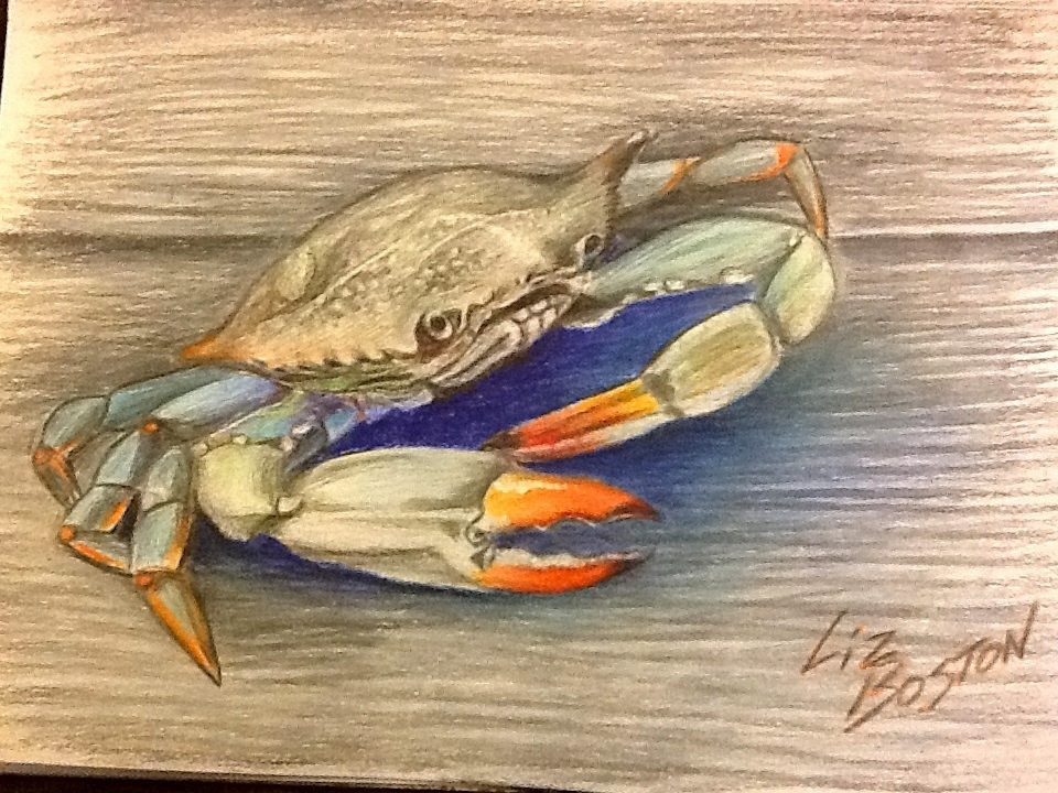 This is an image of Candid Blue Crab Drawing